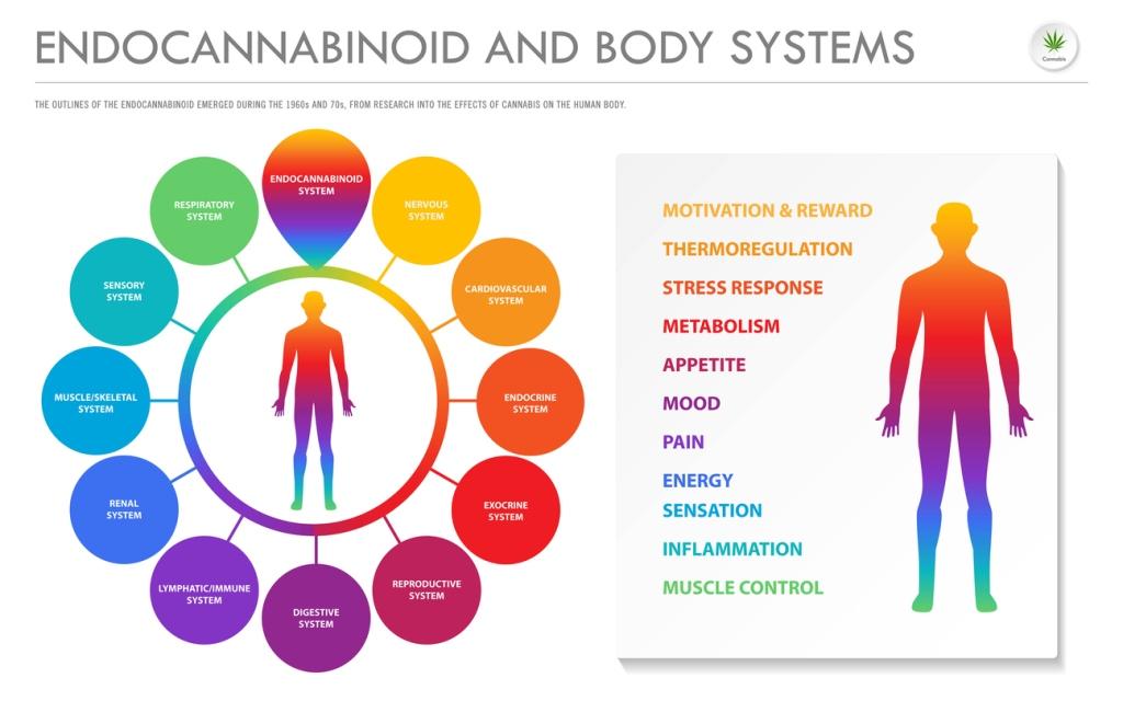 cbd 睡眠 エンドカンナビノイドシステム