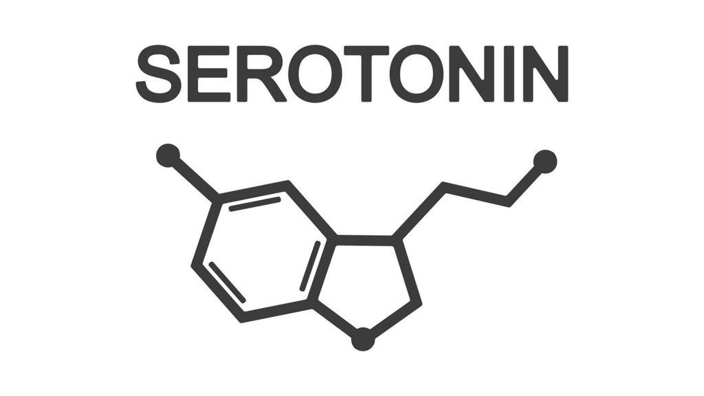 セロトニン うつ病 緊張や不安 女性の問題 女性ホルモン エンドカンナビノイド CBD