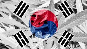 大麻医療 韓国の医療大麻 CBDオイル