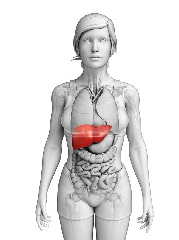 肝臓へのダメージ軽減 CBDと肝臓 二日酔い緩和