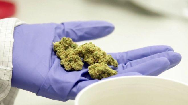 医療大麻 大麻治療 大麻自由診療