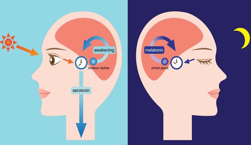 不眠症 メラトニン 女性ホルモンの乱れ セラトニン 自律神経の乱れ