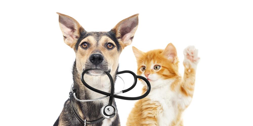 哺乳類とCBDオイル ペット専用CBD 抗炎症作用 CBDの自由診療  ストレス緩和 引きつけ 鎮痛作用 副作用なし