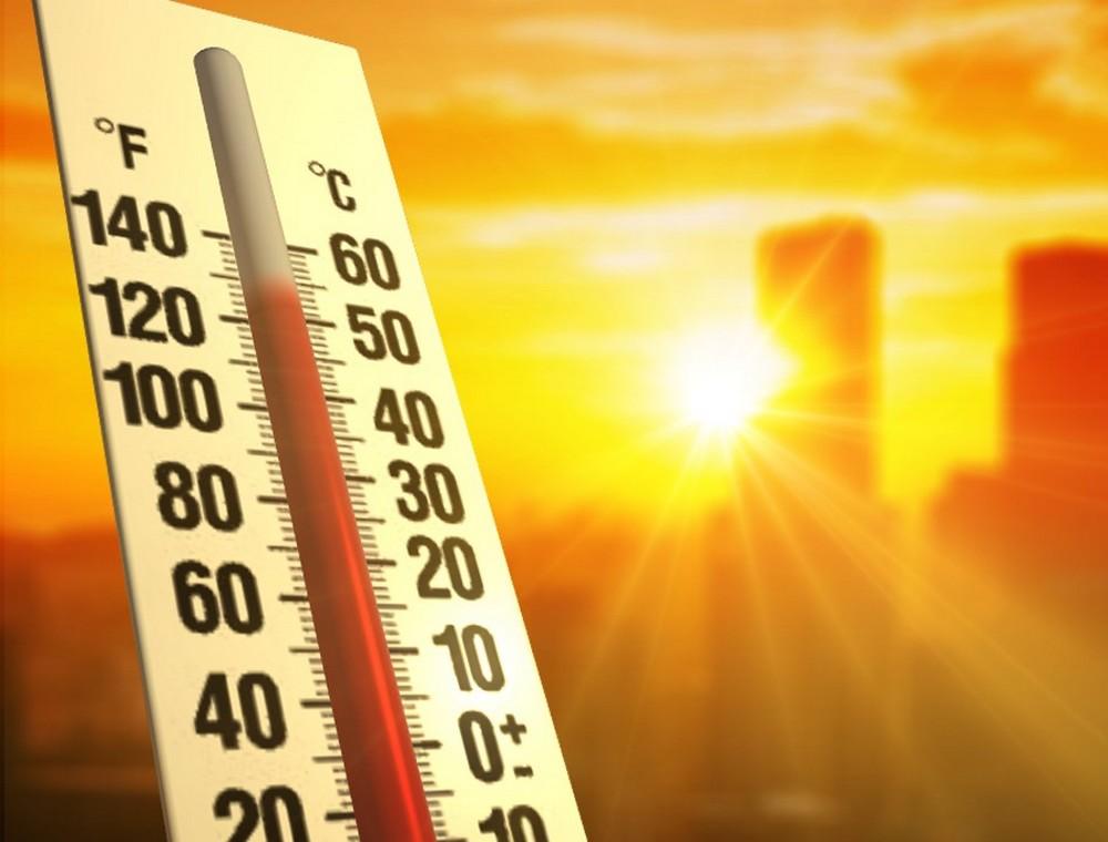 CBD,夏バテ,熱中症,恒常性、熱中症対策